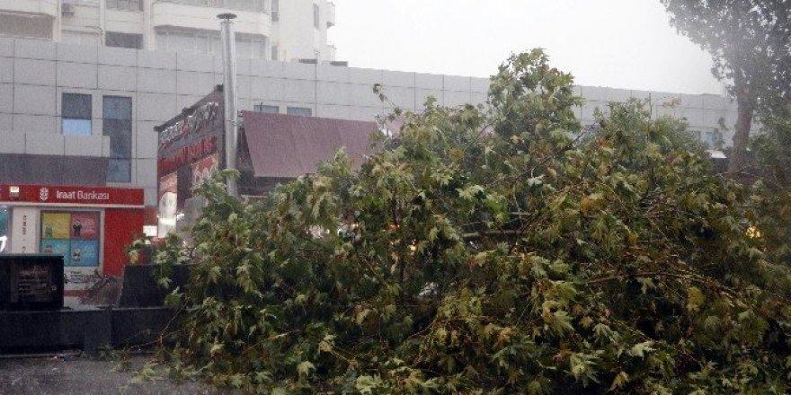 Fırtınada 43 hatta elektrik kesintisi yaşandı