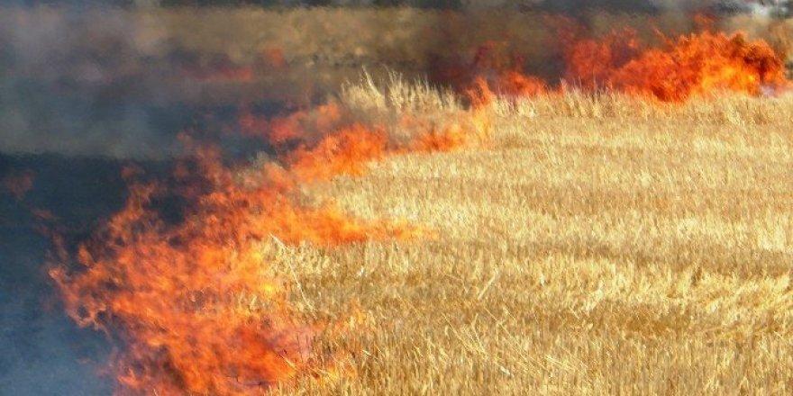 Anız yangınları doğaya zarar veriyor