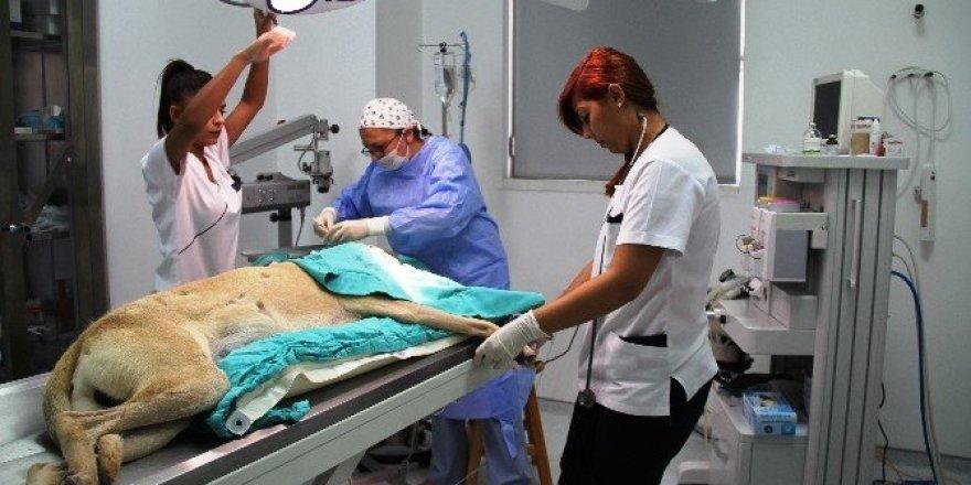 İlk Türk kadın veterinerlerin projesi dünyaya umut olacak