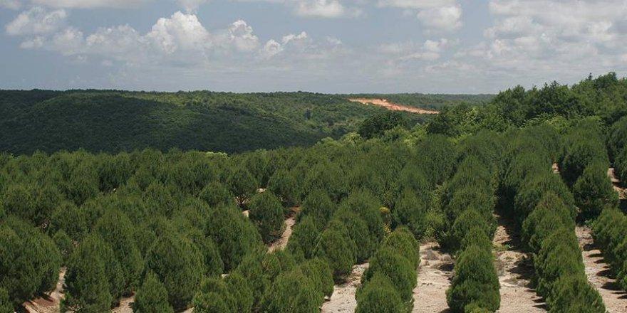 Yanan alanlar aynı yıl ağaçlandırılıyor