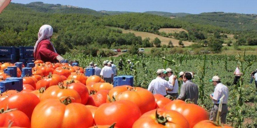 Tokat domatesi 54 ile gönderiliyor, salçası 4 ülkeye ihraç ediliyor