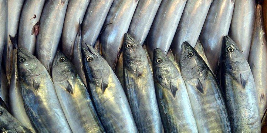 Karadenizli balıkçılara 'palamut avı' uyarısı
