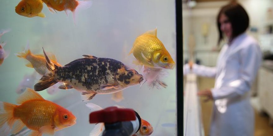 İçme suyu zehirlenmelerine ''Japon balığı'' örneği