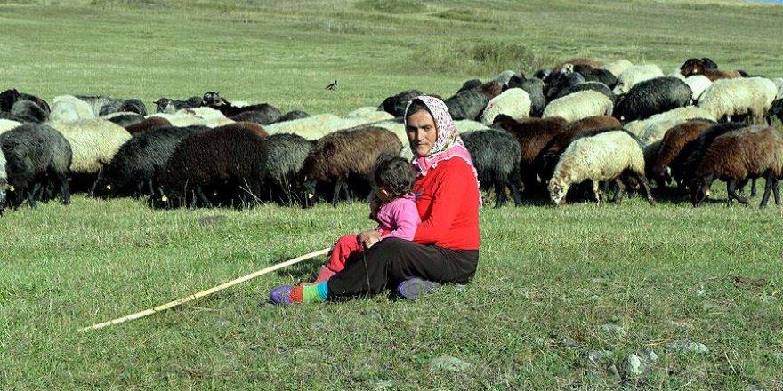 Bir keçileri bile yokken şimdi 40 koyunları var