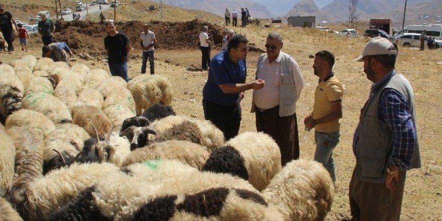 Hakkari'de kurban telaşı