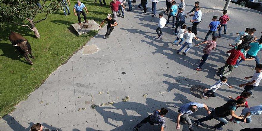 'Kaçan kurbanlıklar' vatandaşlara zor anlar yaşattı