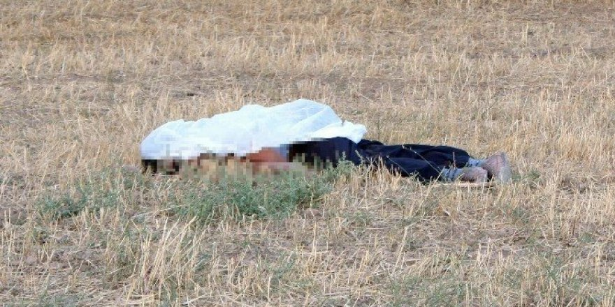 Koyunların tarlaya girmesine sinirlendi, iki kardeşi öldürdü