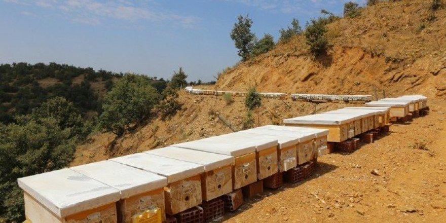 İzmir'e 10 bal ormanı