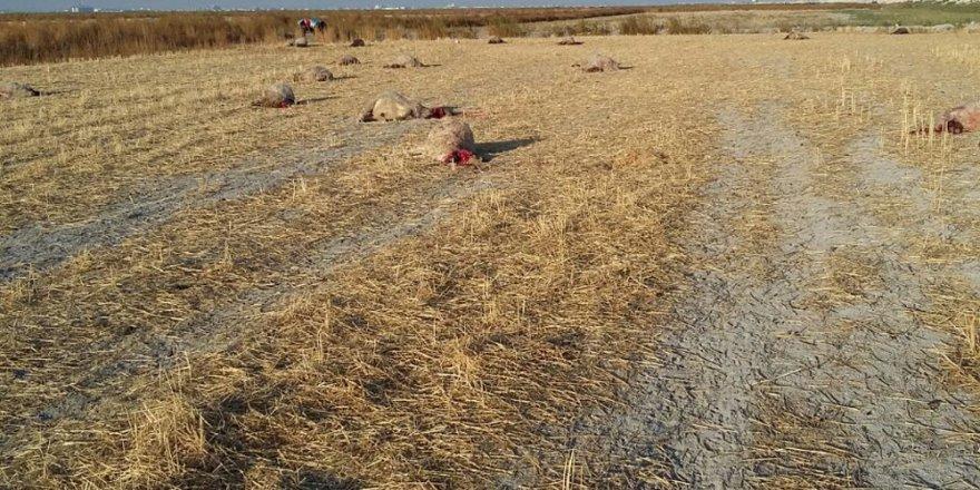Konya'da 41 küçükbaş hayvan telef oldu