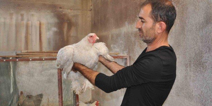 Hobi olarak ürettiği süs tavuklarını 2 bin TL'den satıyor