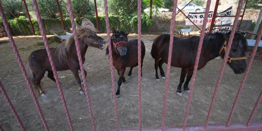 FETÖ'nün kapatılan okulundaki atlara el konuldu