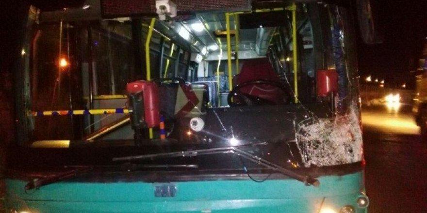 Halk otobüsünün çarptığı at telef oldu