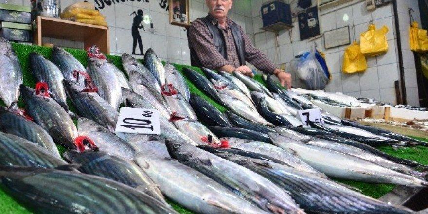Balığın bol olması vatandaşların yüzünü güldürüyor