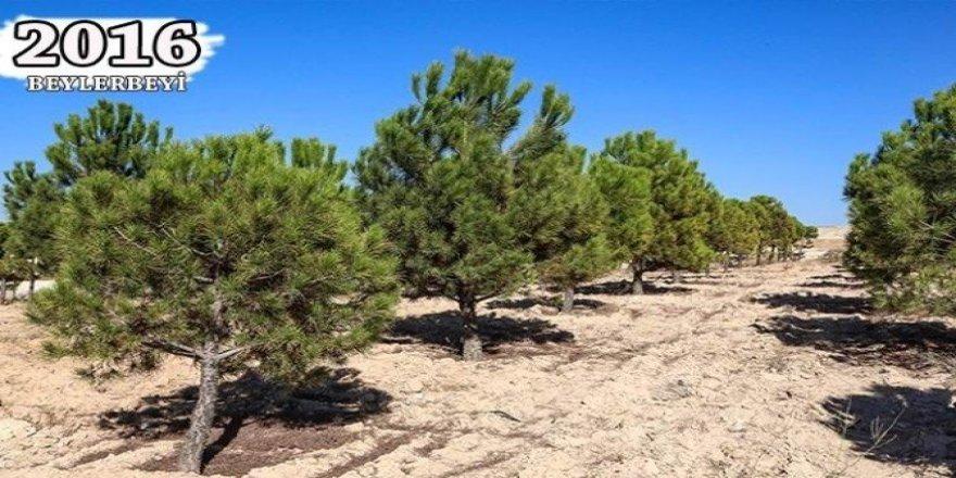 Şehitkamil'in fidanları ağaç oldu