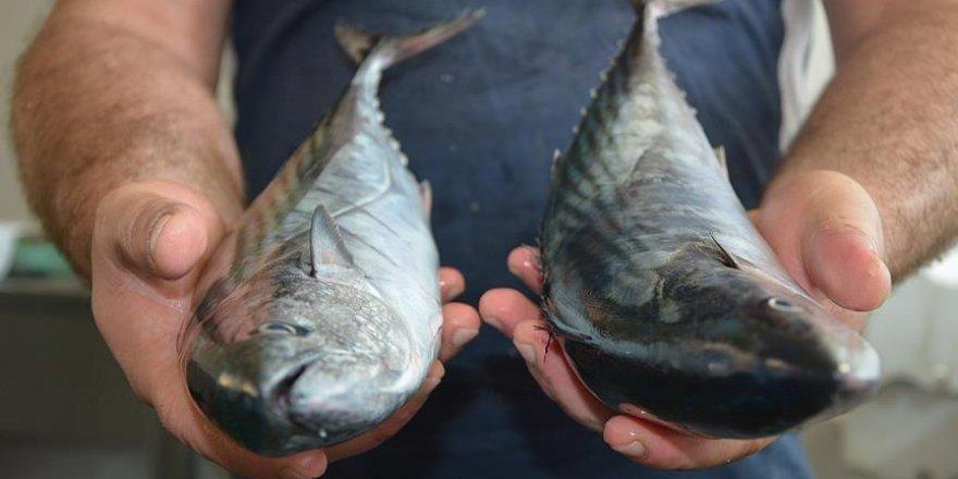 'Vatandaşlar balıkları tuzlamaya başladı'
