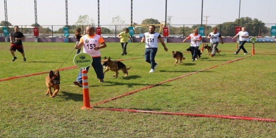Alman çoban köpekleri sokak hayvanları için yarıştı