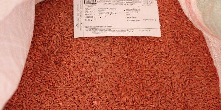 Adıyaman'dan sertifikalı tohum ihracatı