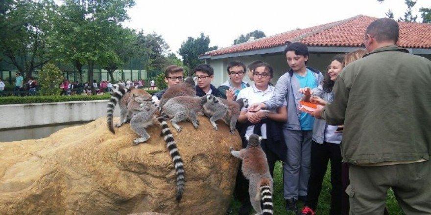 Ücretsiz olunca Zoopark'a akın ettiler
