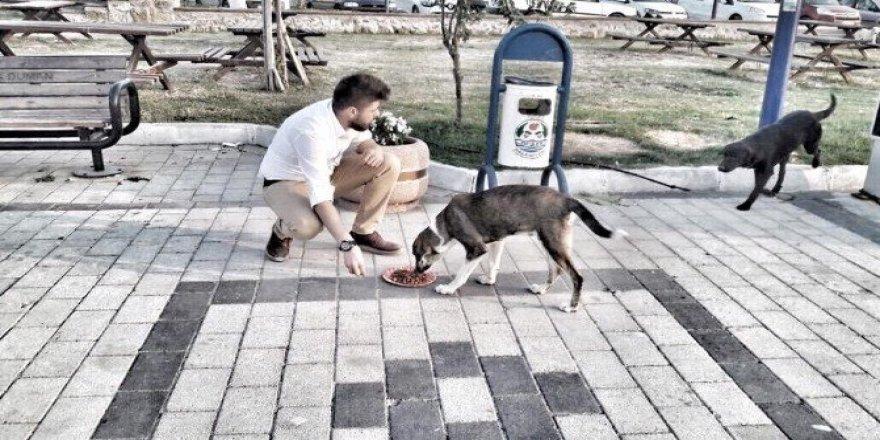 Üniversite öğrencileri sokak hayvanlarını besledi
