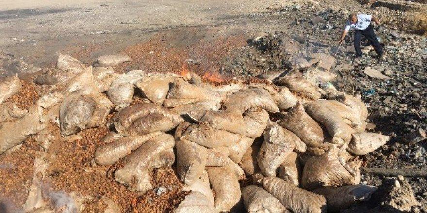 Silopi'de 43 bin 530 kilogram ceviz imha edildi