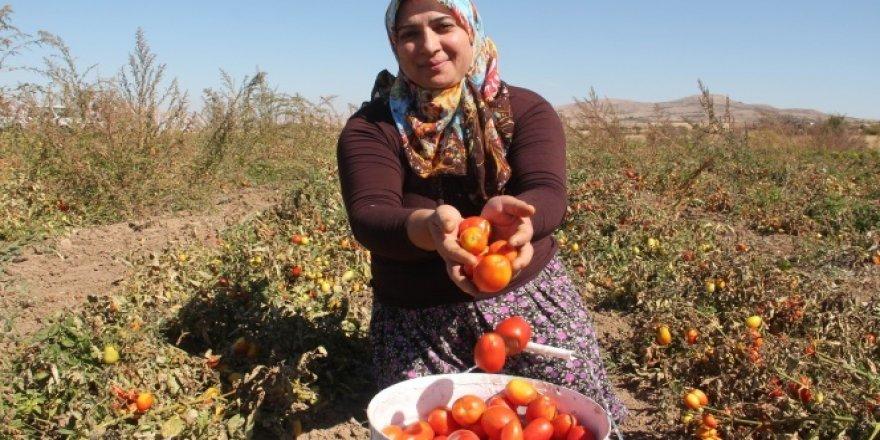 Türkiye'de bir ilk! Çiftçi kadınlar yaptı