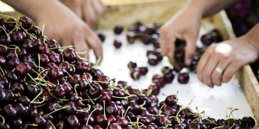 Taze kiraz ve üzüm sektörü yeni pazarlara açılıyor
