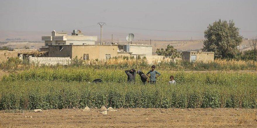 Cerabluslu çiftçilerde 'ekim' heyecanı
