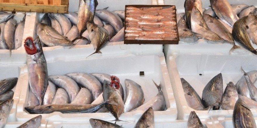 Bandırma'da balık fiyatları ucuzladı