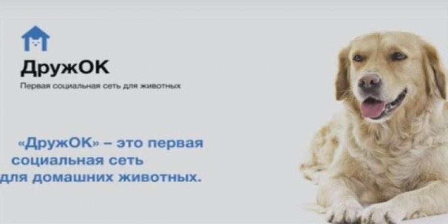 Rusya'da köpekler için 'Facebook' geliyor