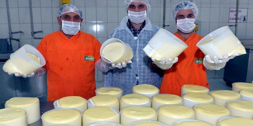 Peynirde lezzetin adı: Göle kaşarı