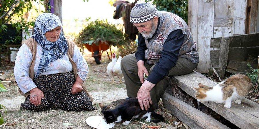 Kedileri 'evlat sevgisi'yle besliyorlar