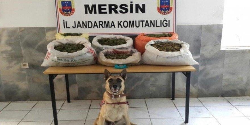 Mersin'de uyuşturucu operasyonu