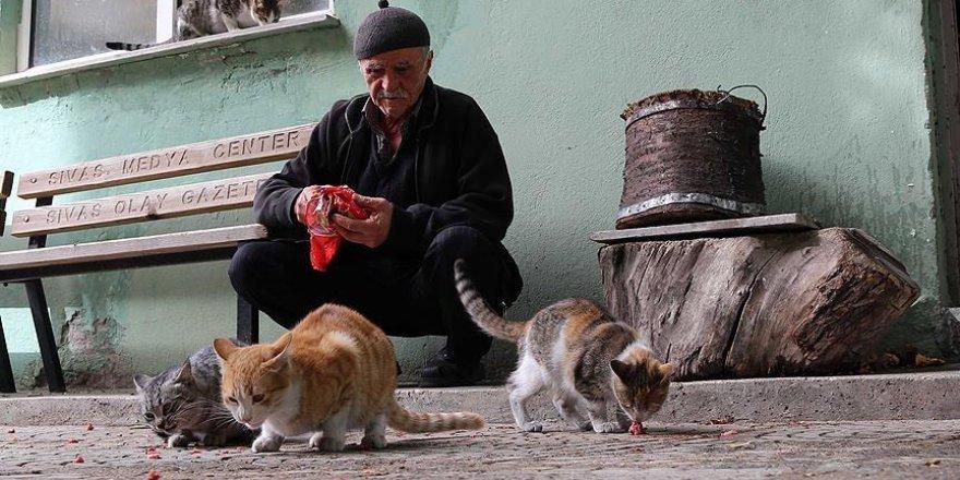 Sokak kedilerinin 'İsmet Dedesi'
