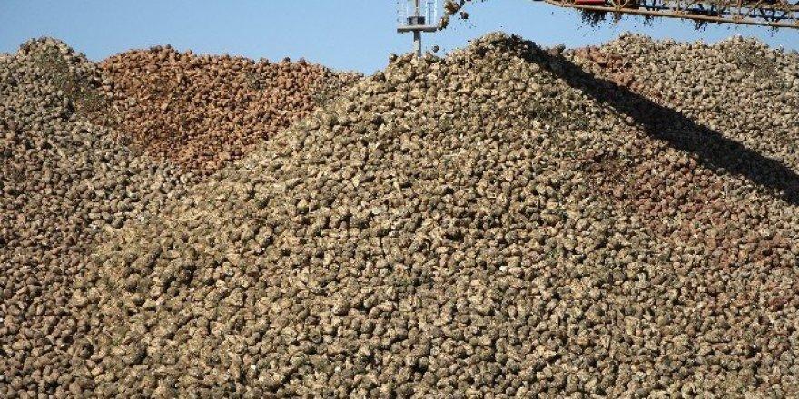 Malatya şeker fabrikası ilk şekerleri piyasaya sürdü