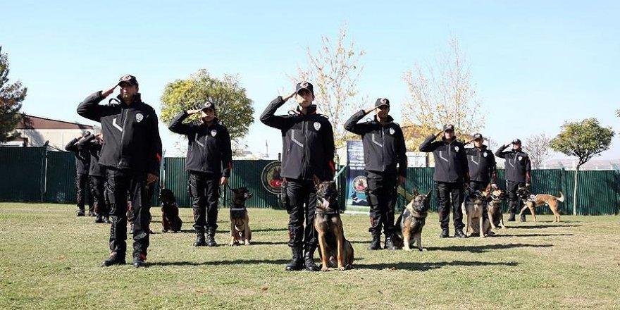 23 dedektör köpek göreve hazır