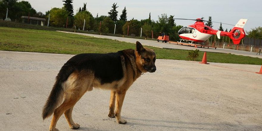 Hava ambulans merkezinin 'Paşa'sı