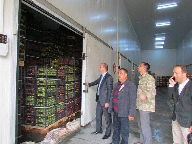 Çamardı Kaymakamı Mustafa Serin elma hasadında inceleme yaptı