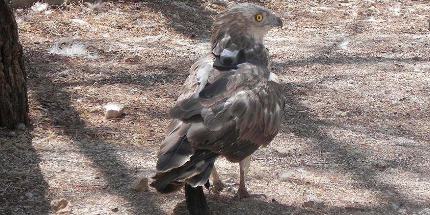 Bakanlık 18 kuşu GPS ile takip ediyor