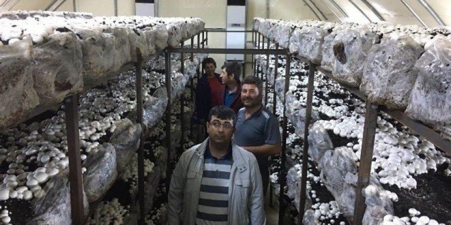 Beyşehir'de genç çiftçiler kültür mantarı yetiştiriyor