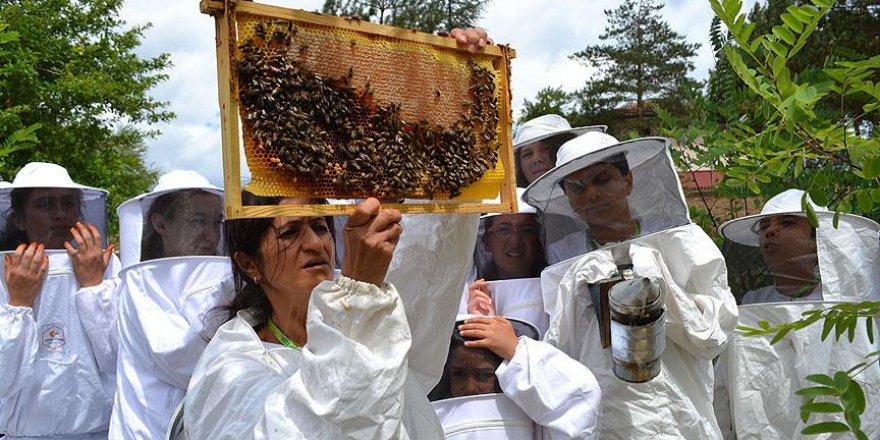 'Sokmayan arılar' ilgi görüyor