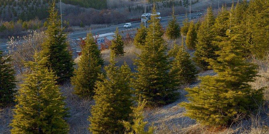 6 bin 500 hektarlık alan ağaçlandırılacak