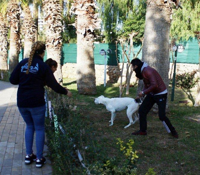 Yangından kurtarılan köpek mutluluk yaşattı