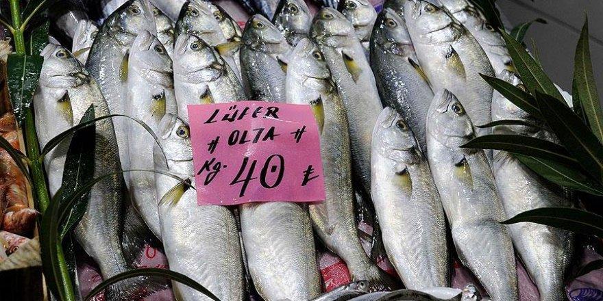 Balıkçılar palamuttan sonra 'denizlerin prensi'nden de umutlu