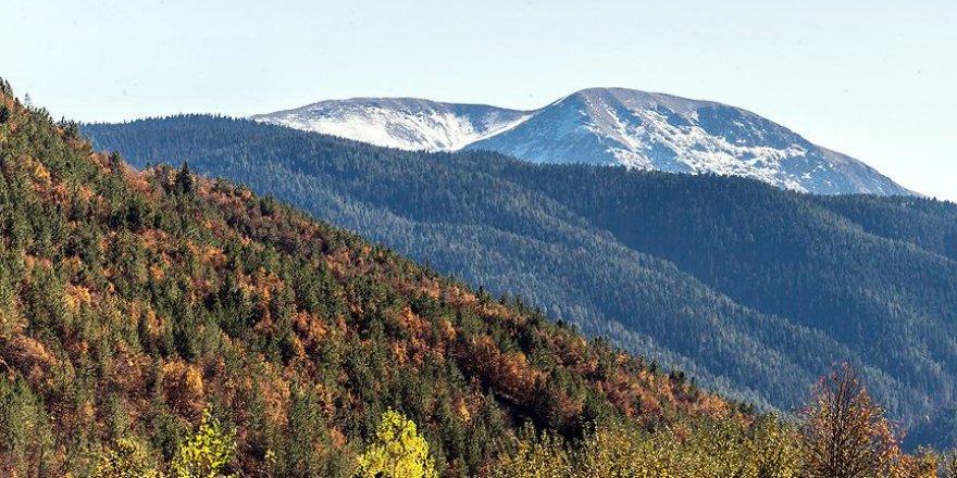 Kağıtta geri dönüşüm yılda 25 milyon ağacı kurtarıyor