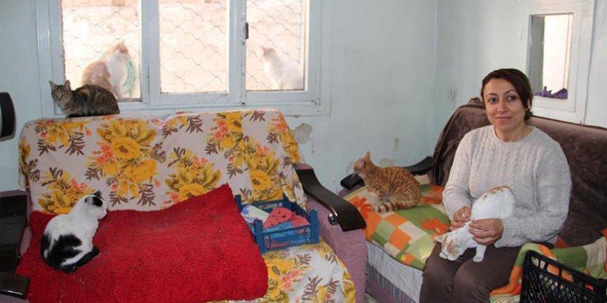 İki katlı evini sokak kedilerine tahsis etti