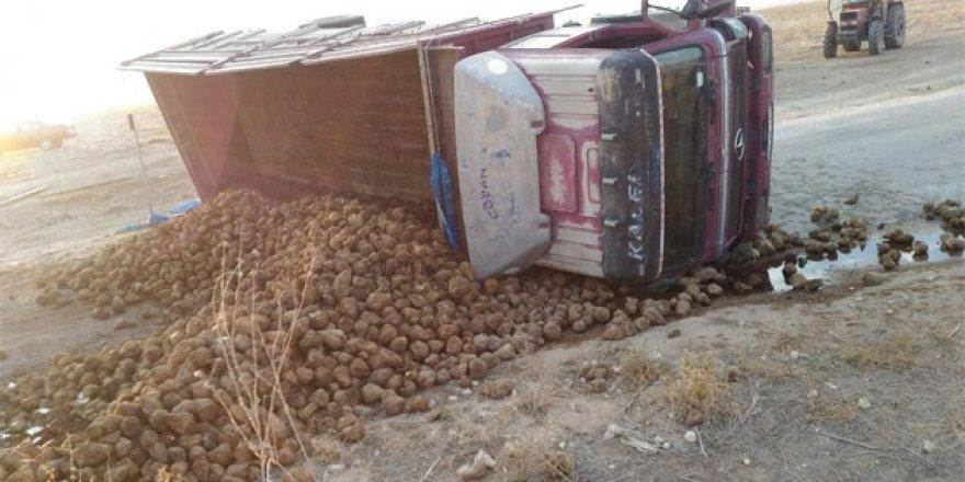 Yunak'ta pancar yüklü kamyon devrildi