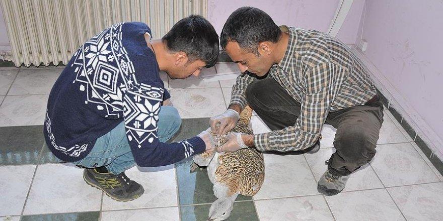 Tunceli'de yaralı toy kuşu bulundu