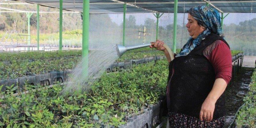 Mersin'de 10 yılda 89 milyon 463 bin fidan üretildi