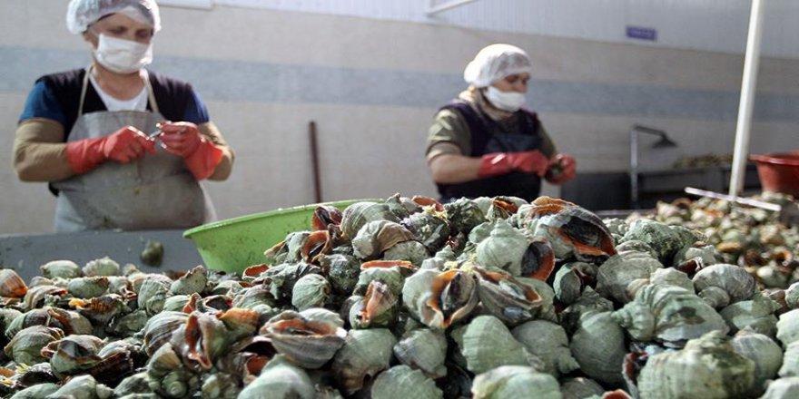 Salyangoz ihracatı yüzde 36 arttı