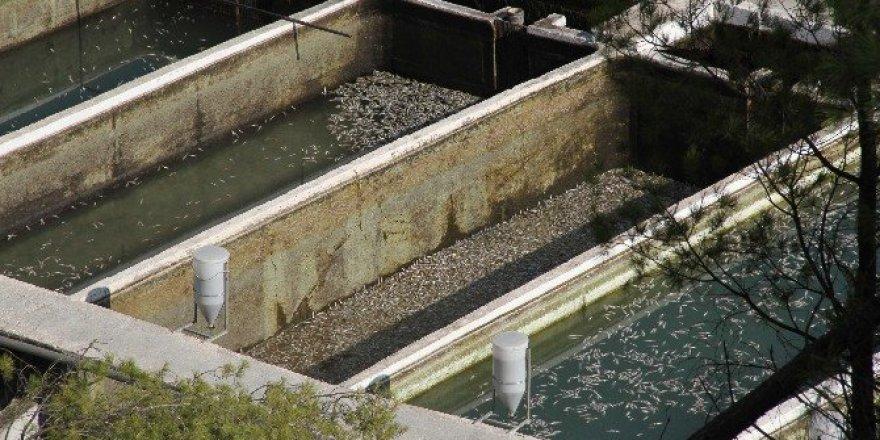 Muğla'da milyonlarca balık telef oldu